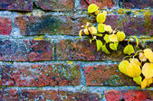 Autumn leaves against red brick wall, natural frame background — Stock Photo