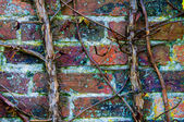 Vines against red brick wall, natural frame background — Stock Photo