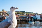 Scenic view of Whitby city and abbey in sunny autumn day — Stock Photo