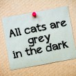 All cats are grey in the dark — Stock Photo #68730843