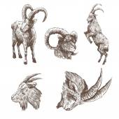 Set of goat hand drawn — Stock Vector