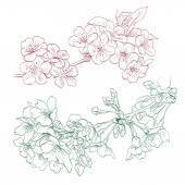 Flowers hand drawn, vector illustration — Stock Vector