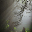 Sunny beams in the foggy forest — Stock Photo #62049551