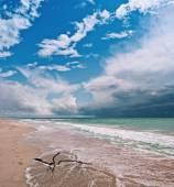 The sea shore — Stock Photo