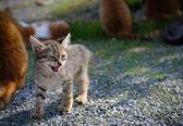 Growl catty — Stock Photo