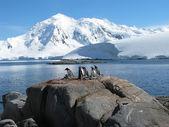 Antarctic — Stock Photo