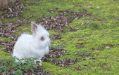 Cute Angora rabbit sitting in the grass on a autumn day — Stock Photo