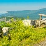 Shawangunk Mountains — Stock Photo #52914669