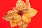 Gold Poinsettia — Stock Photo