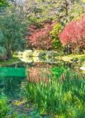 Springtime Garden — Stock Photo