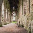 Ruins of Tintern Abbey, a former cistercian church from the 12th — Stock Photo #53832571
