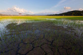 Cracked soil on a paddy field in Kota Belud, Sabah, Borneo, East Malaysia — Stock Photo