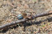 Wandering spider — Stock Photo
