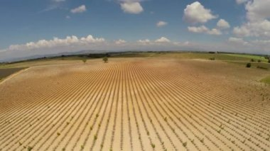 Aerial video Provence - lavender field in the Gordes ,France — 图库视频影像
