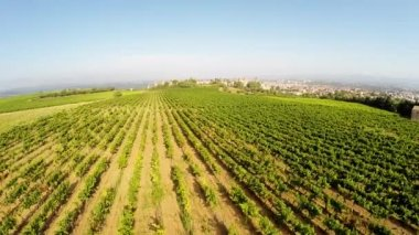 Aerial video of the old town Carcassonne from the vineyard. Southern France — Stock Video