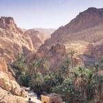 Mountain oasis Chebika at border of Sahara, Tunisia, Africa — Stock Photo #56502143