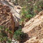 Mountain oasis Chebika at border of Sahara, Tunisia, Africa — Stock Photo #56502903