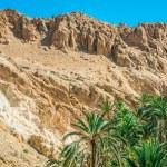Mountain oasis Chebika at border of Sahara, Tunisia, Africa — Stock Photo #56503691