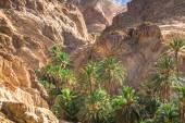 Dağ oasis chebika sahara, tunus, afrika'nın sınırında — Stok fotoğraf