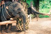 Elephants in Thailand — Stock Photo