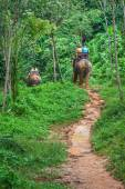 Tourist Group Rides Through the Jungle on the Backs of Elephants — Stock Photo