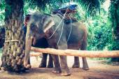 Elephants in Thailand — Stock Photo