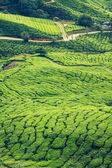 Green Hills of Tea Planation - Cameron Highlands, Malaysia — Stockfoto