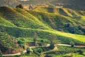 Green Hills of Tea Planation - Cameron Highlands, Malaysia — Zdjęcie stockowe