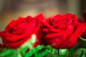 Red roses over valentines day  — Stock Photo