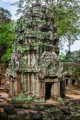 Ancient ruins in Ta Prohm or Rajavihara Temple at Angkor, Siem R — Stok fotoğraf