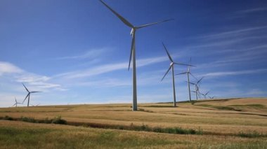 Wind turbines on green meadow. Facinas, Cadiz, Spain — Stock Video