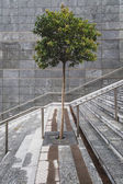 Solitary tree in the middle of a staircase — Stock Photo