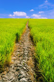 Ditches in the field,summer — Stock Photo