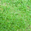 Real green grass texture ,close up — Stock Photo #53956269
