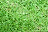 Véritable vert herbe texture, gros plan — Photo