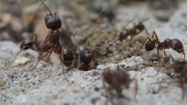Ants guarding the entrance — Stock Video