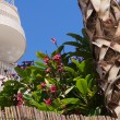 Постер, плакат: Subtropical flora and balcony