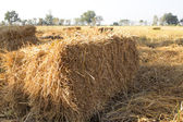 Straw in cornfield background — Stock Photo