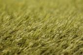 Grass — Stock fotografie