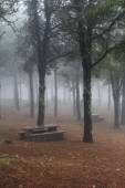 Misty woodland with park benches — Stock Photo