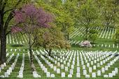 Arlington cemetery graveyard — Foto de Stock