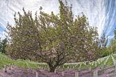 Arlington cemetery graveyard — Photo