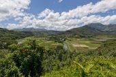 Hawaii kauai fields — Stock fotografie