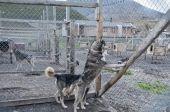 Svalbard slädhund gård — Stockfoto