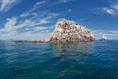 Los islotes seal island in mexico baja california — Stock Photo