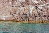 Los islotes seal island in mexico baja california — Foto de Stock