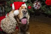 A santa dressed puppy dog christmas xmas — Stock Photo