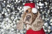 Santa dressed puppy dog christmas xmas  — Stockfoto
