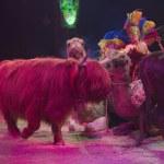 Circus yak — Stock Photo #60417933