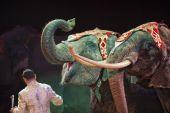 Circus elephant — Stock Photo